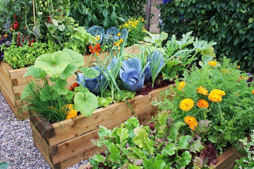Create+A+Home+Garden