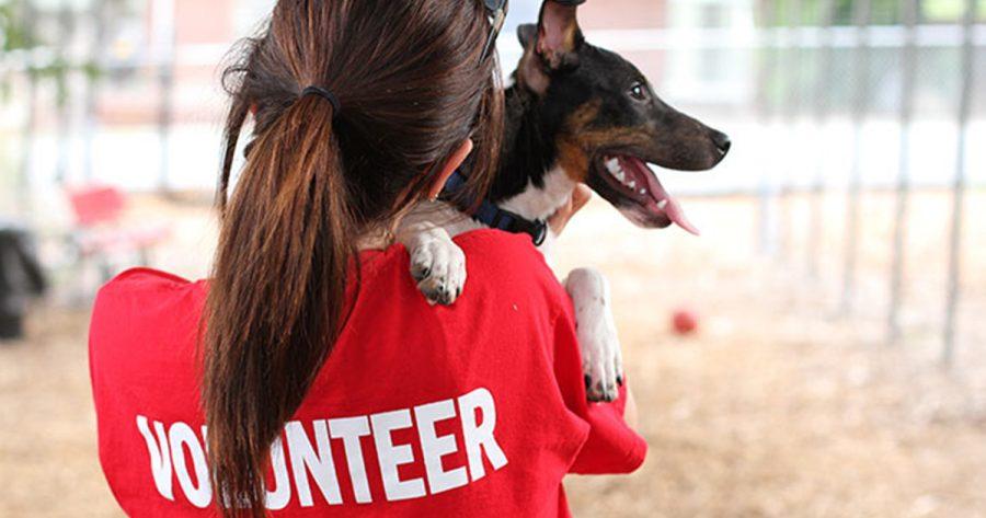 Volunteer at a Pet Adoption Center This Holiday Season